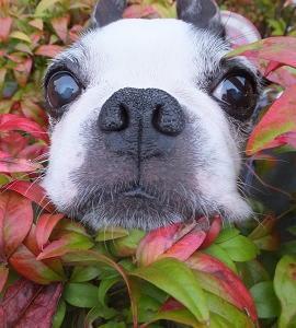 秋のはな。