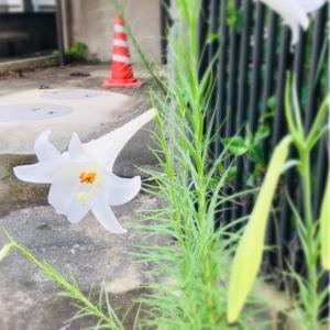 帰省と自生の花とお供えの花
