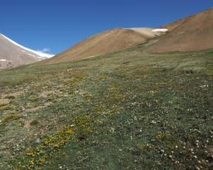 西モンゴルの花々