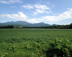 北海道花の旅 8 小清水&ワッカ原生花園