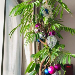 我が家のクリスマスツリーはエバーフレッシュで