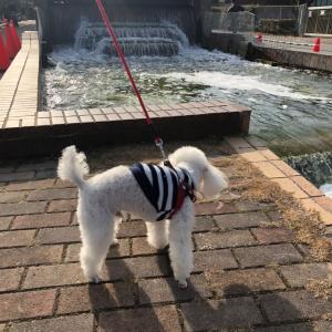 舞鶴公園ワンコと散歩に行ってきました