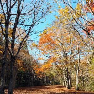 深まる秋の森林公園-1