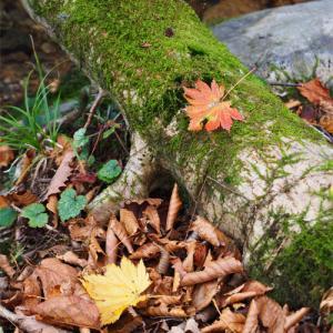 深まる秋の森林公園-2