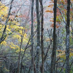 深まる秋の森林公園-3