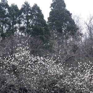 春の岡山県立森林公園