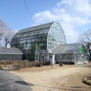 1月の半田山植物園・温室に咲く花