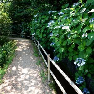 アジサイの散歩道・みやま公園