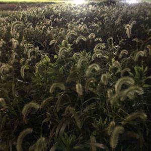 夏の夜の草むらで
