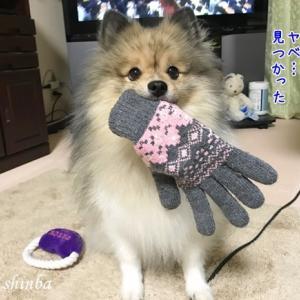手袋とポメラニアン