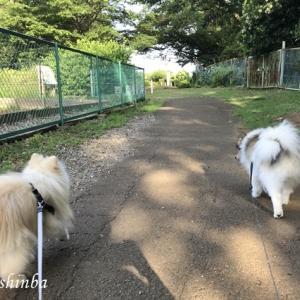 梅雨入り前の公園散歩