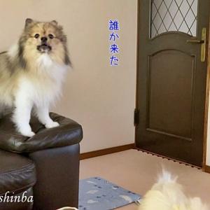 歓喜の犬とじっと待つ犬