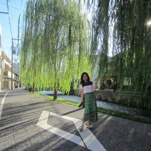 京都白川の柳