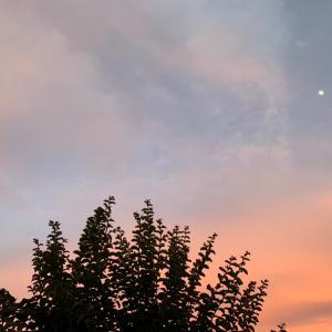 夕焼け色のうさぎさん