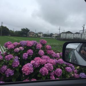 梅雨空の日々