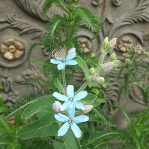 ボード前の花壇