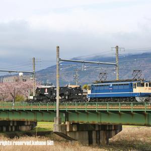 EF65+シキ801 桜コラボ