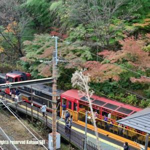 嵯峨野トロッコに乗車
