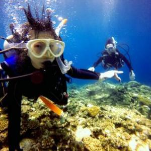 夏空の石垣島でペット同伴のファミリー体験ダイビング!