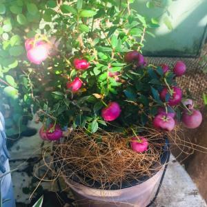 今朝のベランダと室内植物