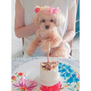 ルフナの1歳のお誕生日ケーキ☆
