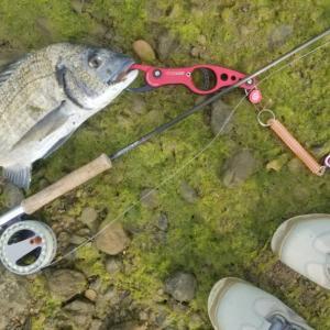 saltwater flyfishing♪ sight fishing! 私の趣味時間♪