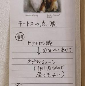 「万が一」に備えた犬との暮らし