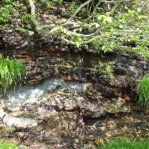 5月13日 米代川水系