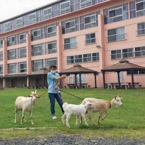 ★山羊つかい