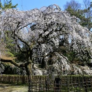 京都御所 近衛邸跡 2020.3.25 Sanpo 234