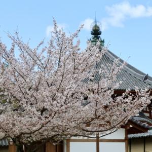 興福寺参拝 2020.4.5 Sanpo 247