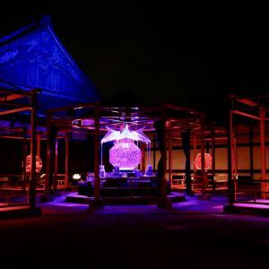 Art Aquarium in Nijo-jo Castle 2020.11.1 Event 77