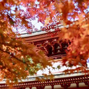 金剛峯寺 壇上伽藍参拝 2020.11.3 Sanpo 324
