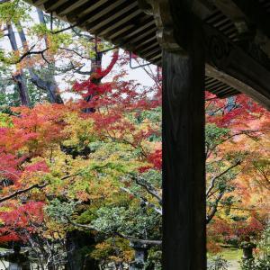 西明寺参拝 2020.11.6 Sanpo 335