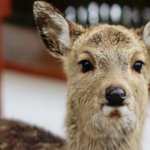 Deer Park 2021.1.24 Sanpo 366