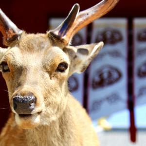 Deer Park 2021.5.30 NaraPark 61