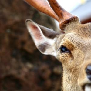 Deer Park 2021.6.5 NaraPark 62