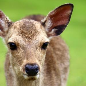 Deer Park 2021.6.5 NaraPark 63