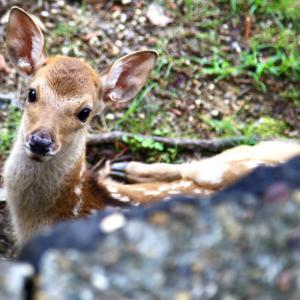 Deer Park 2021.7.4 NaraPark 86