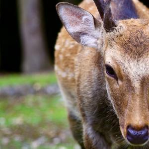 Deer Park 2021.8.29 NaraPark 124