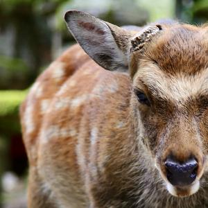 Deer Park 2021.8.29 NaraPark 125