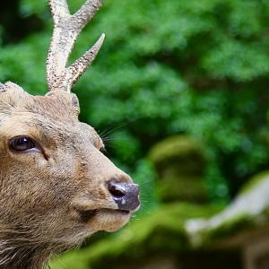 Deer Park 2021.8.29 NaraPark 126
