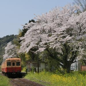 小湊鐵道と桜