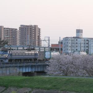 EF66-27と馬入の桜