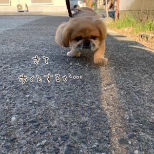 歩きたい?