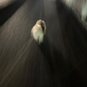 夜の散歩:(;゙゚'ω゚'):