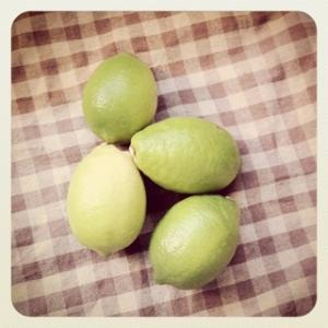 愛媛産 レモン