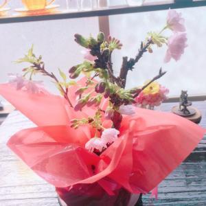 卒業祝いの桜開花