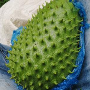 このフルーツ ビクトルのご両親が栽培しているコロンビアのフルーツ