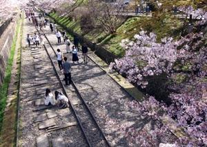 桜の散り際